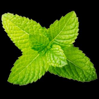 Menthol (Flavor Jungle)